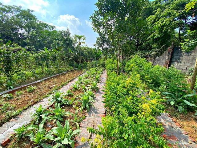 Đất nền biệt thự vườn Hà Nội