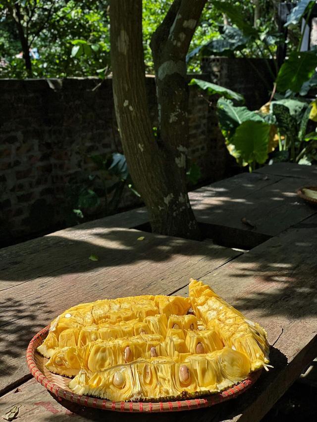 Mít vườn nhà Củ Chi