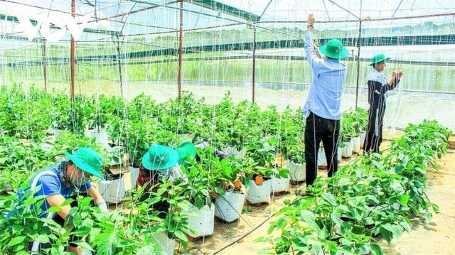 Mô hình nông trại xanh của kỹ sư Nguyễn Mạnh Tùng