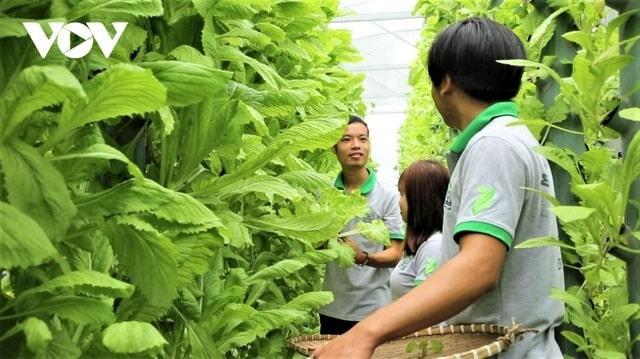 Mô hình nông trại xanh