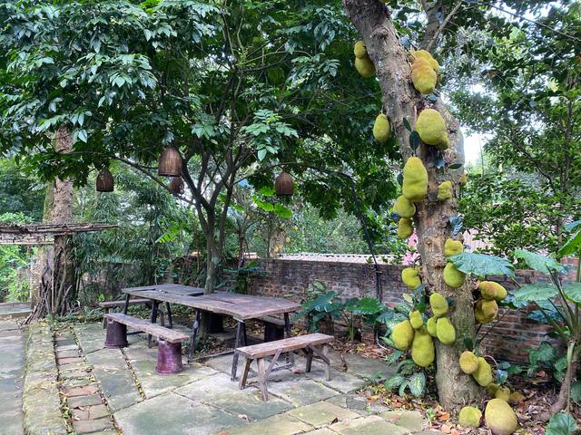 Vườn cây ăn trái Củ Chi